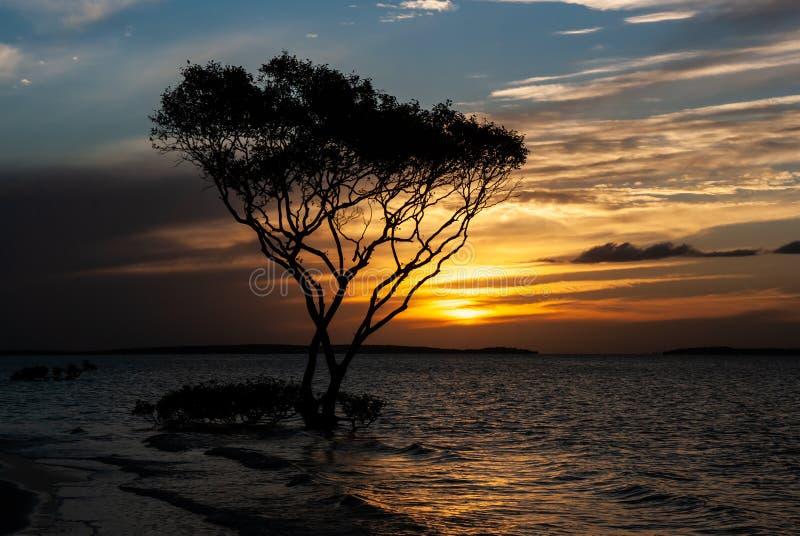 Un ?rbol solitario por la playa en la puesta del sol foto de archivo
