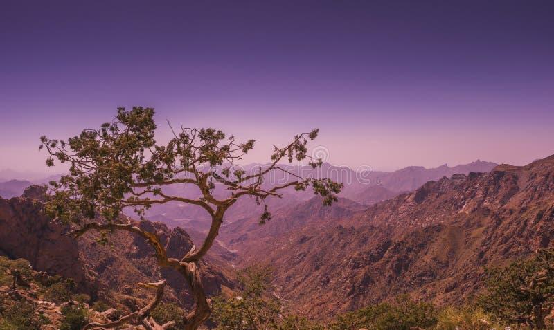 un árbol solitario que se ocupa un valle fotografía de archivo libre de regalías