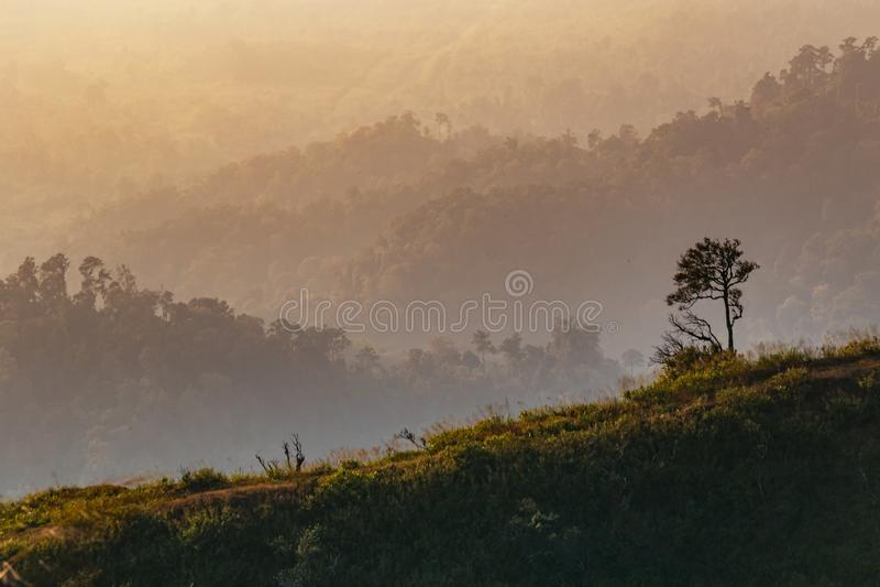 Un árbol solo con la colina en el fondo imagen de archivo