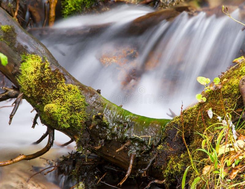 Un árbol solo dobla a la fuerza de una caída del agua imagen de archivo