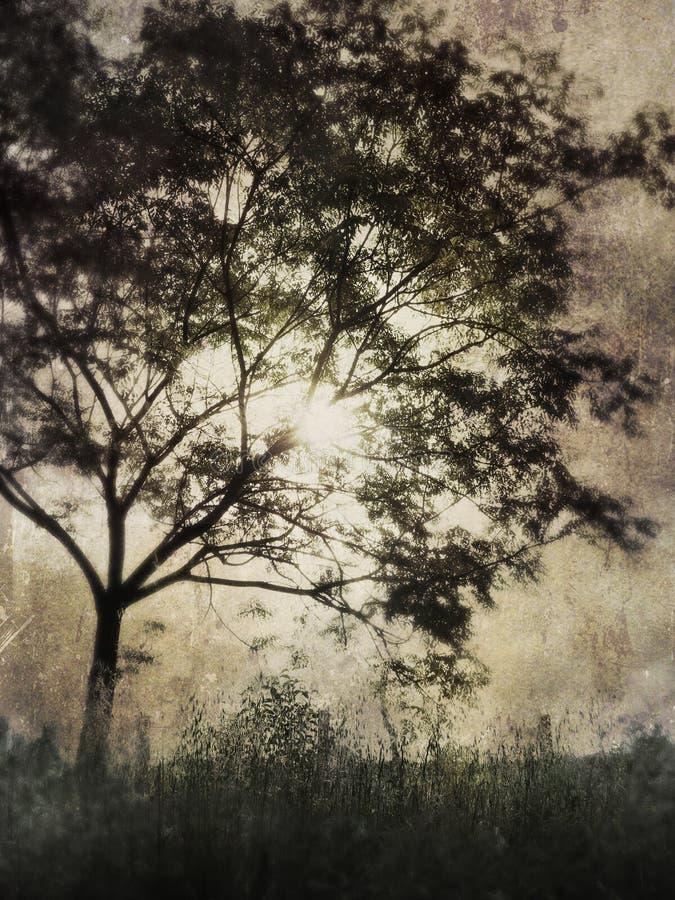 Un árbol viejo fotografía de archivo libre de regalías