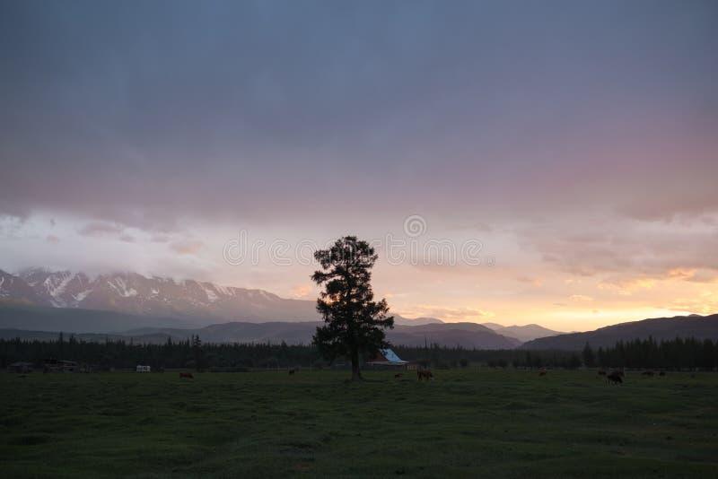 Un árbol viejo en la colina de montañas fotografía de archivo