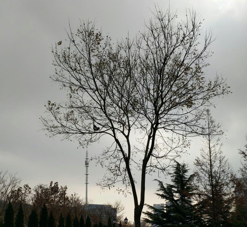 Un árbol y una urraca imagen de archivo
