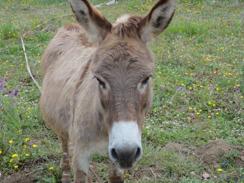 Un âne debout de visage photographie stock libre de droits