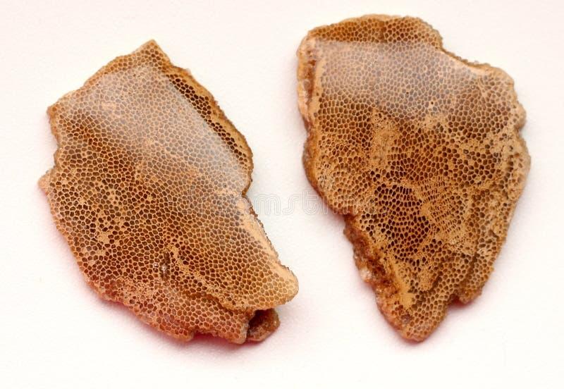 Cabochons de corail photos stock