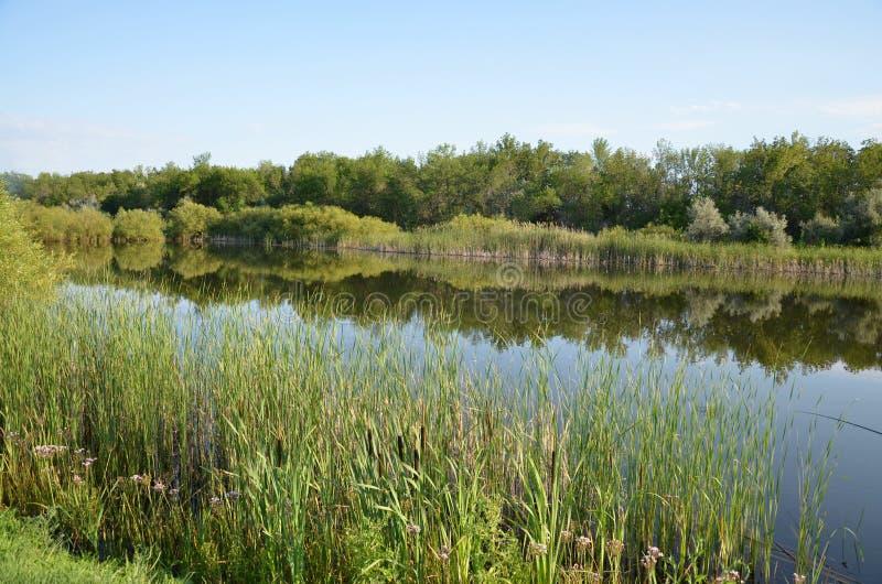 Un étang d'été, la réflexion de la forêt dans l'étang photo libre de droits