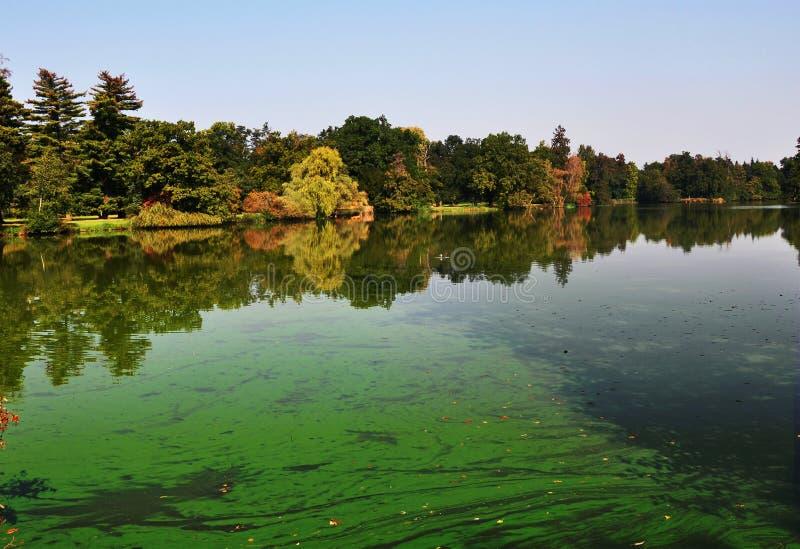 Un étang européen a couvert beaucoup de cyanobacteria, biofilm vert se développe sur l'eau image libre de droits