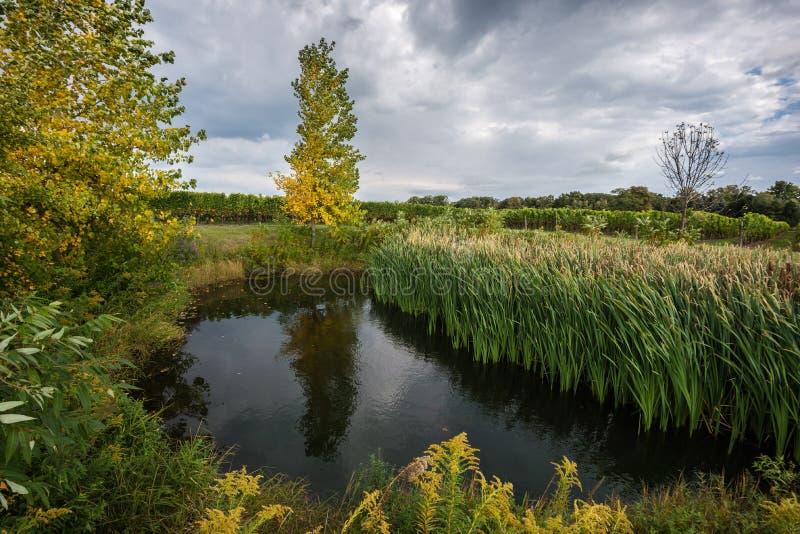 Un étang idyllique, entouré par les arbres d'automne et l'herbe verte photos stock