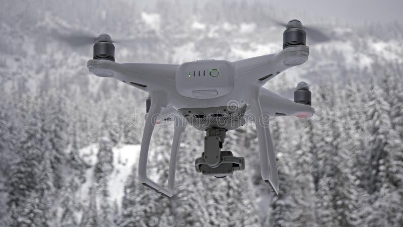 Un abejón asoma en vuelo delante de la cámara contra un fondo alpino del bosque blanco como la nieve imagenes de archivo