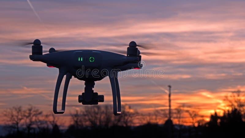 Un abejón asoma en vuelo delante de una puesta del sol fotografía de archivo libre de regalías