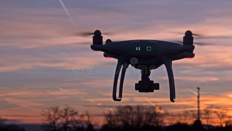 Un abejón asoma en vuelo delante de una puesta del sol imagen de archivo libre de regalías