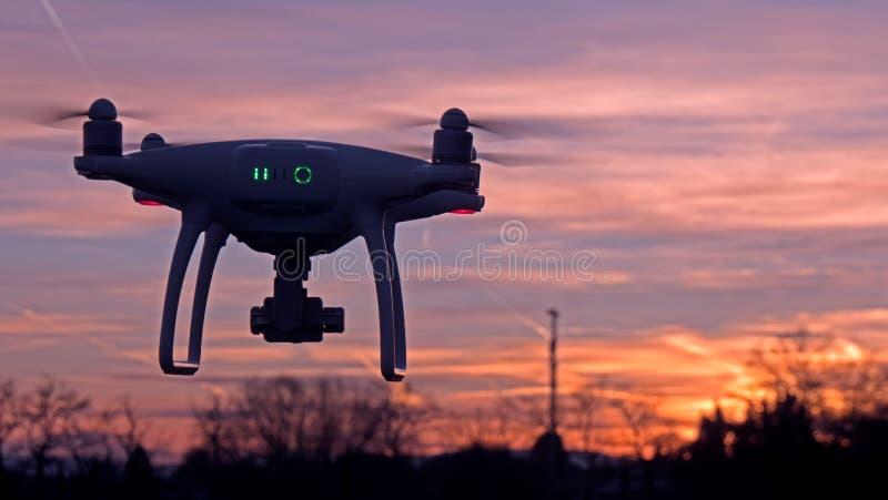 Un abejón asoma en vuelo delante de una puesta del sol imágenes de archivo libres de regalías