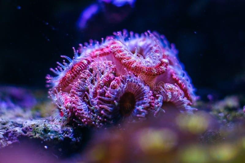 Un abitante meraviglioso del fondo del mare immagine stock