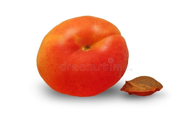 Un abricot avec des graines sur le fond blanc images libres de droits