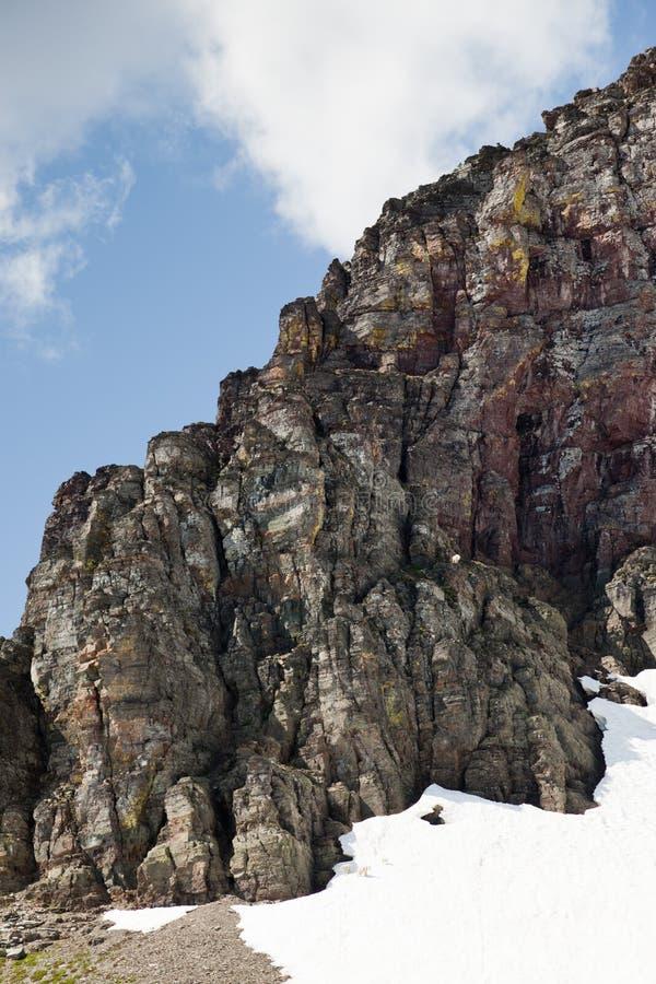 Cabras de montaña del hallazgo cuatro imagenes de archivo