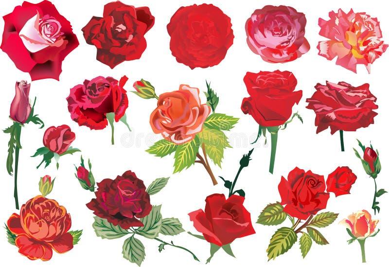 Un'accumulazione rossa delle diciassette rose royalty illustrazione gratis