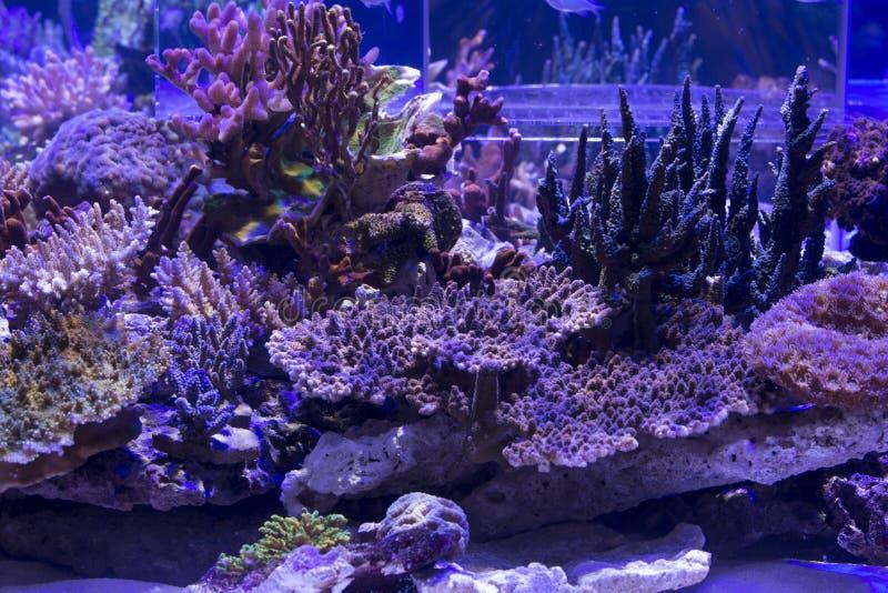 Un acuario hermoso del arrecife de coral fotografía de archivo