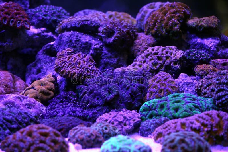 Un acuario hermoso del arrecife de coral imagen de archivo libre de regalías