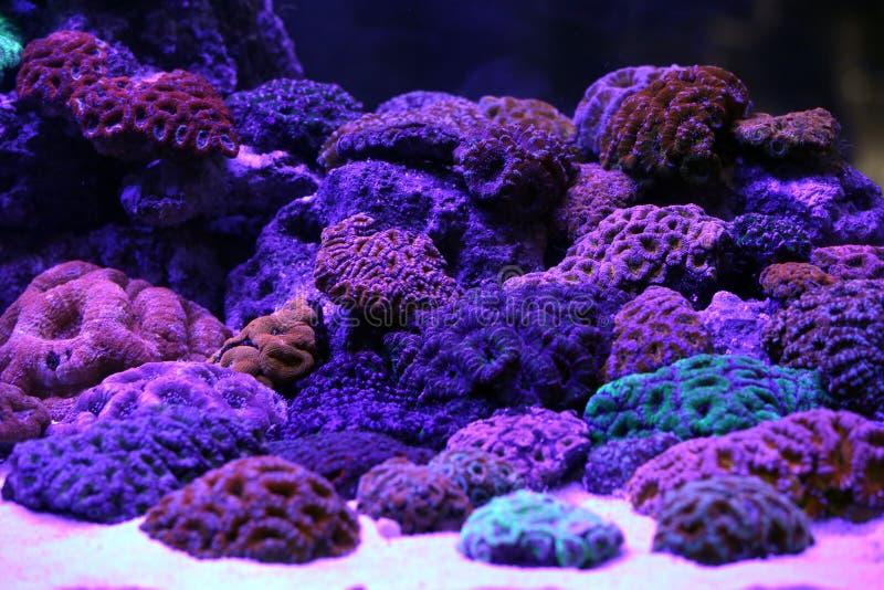 Un acuario hermoso del arrecife de coral imagenes de archivo