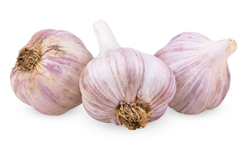Un aglio di tre porpore immagine stock