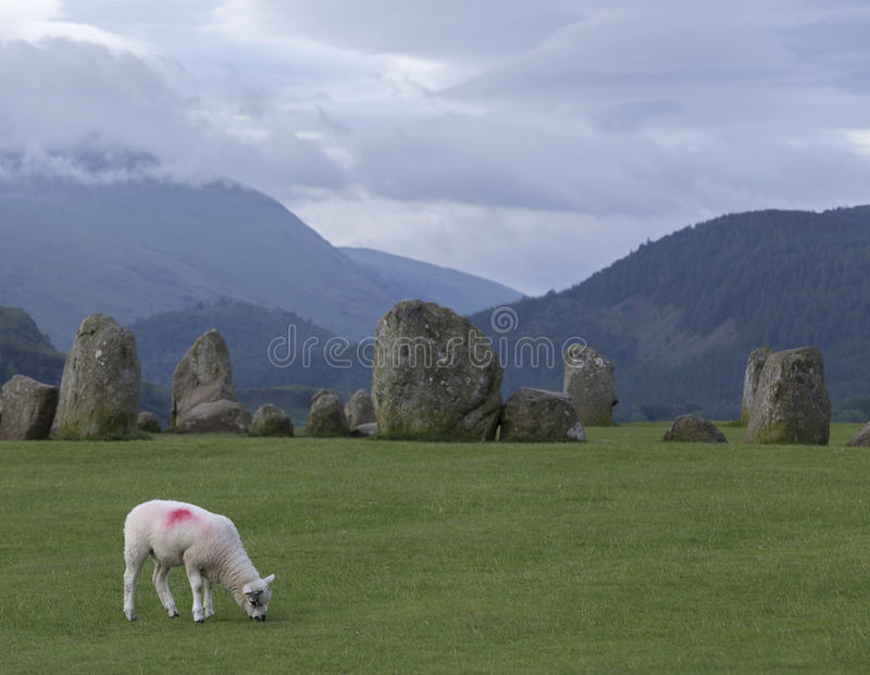 Un agneau frôlant au cercle de pierre de Castlerigg photo libre de droits