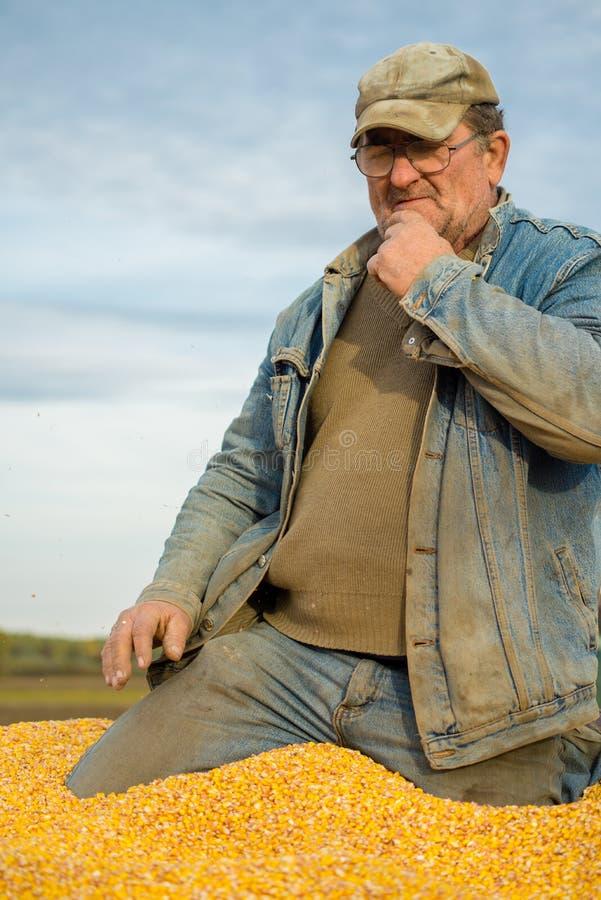 Un agriculteur dans une remorque de tracteur complètement de maïs photographie stock libre de droits