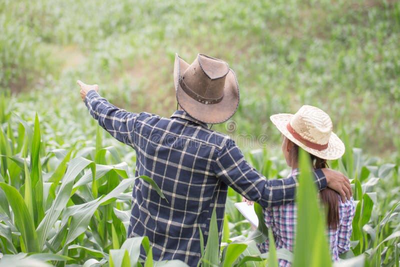 Un agriculteur et son épouse se tenant dans leur champ de maïs heureusement photo stock