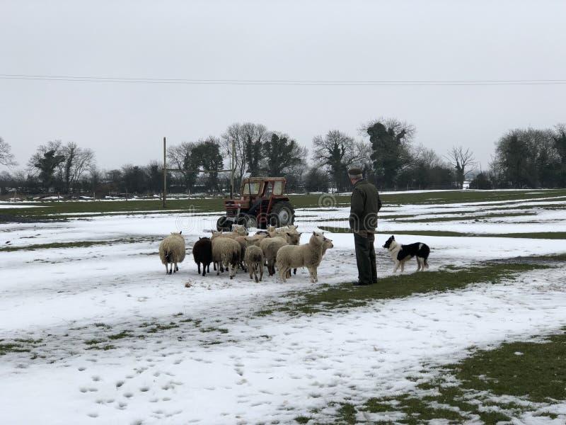 Un agriculteur irlandais photo stock