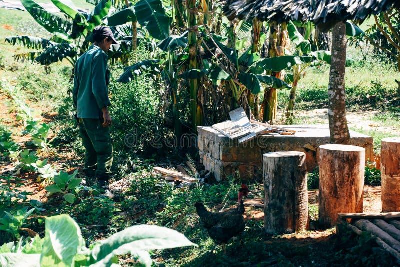 Un agriculteur local de tabac se tient à la nuance dans Vinales, Cuba photos stock