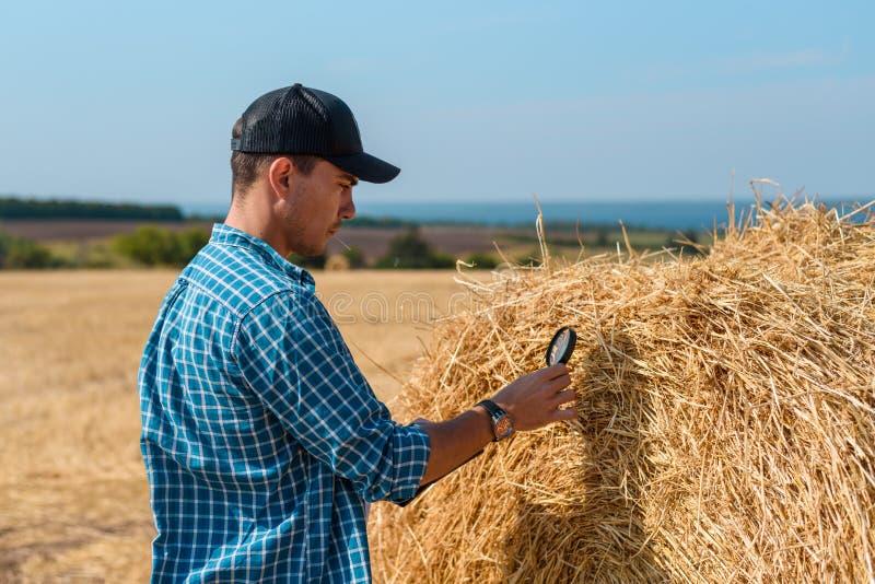 Un agronomo dell'uomo in un cappuccio in un campo con una compressa e una lente d'ingrandimento valuta il raccolto del fieno fotografie stock