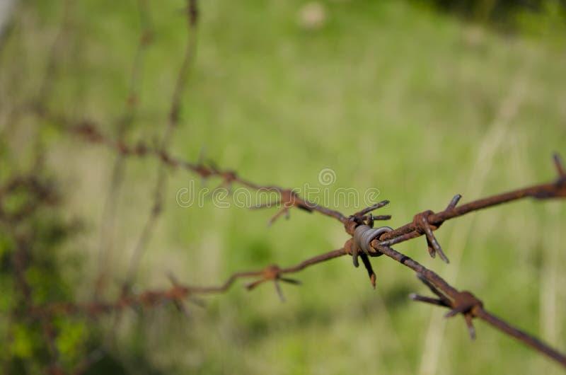 Un alambre de púas viejo en el territorio abandonado imagen de archivo
