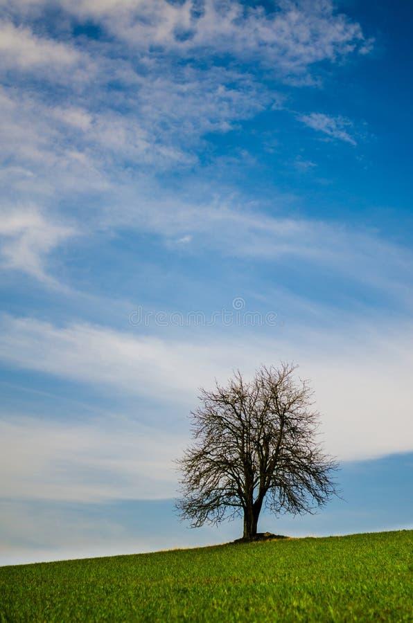 Un albero abbandonato senza foglie su un prato verde immagine stock