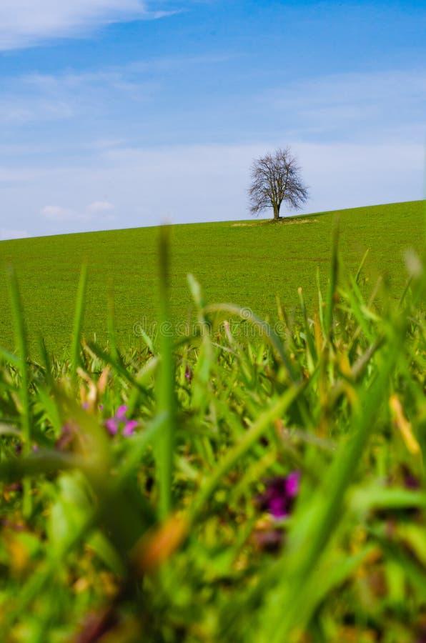 Un albero abbandonato senza foglie su un prato verde fotografia stock