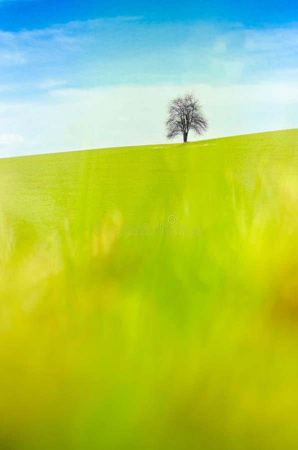 Un albero abbandonato senza foglie su un prato verde fotografie stock libere da diritti