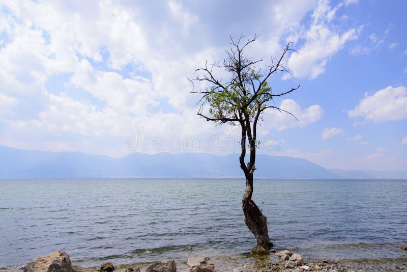 Un albero accanto al lago Erhai fotografia stock libera da diritti