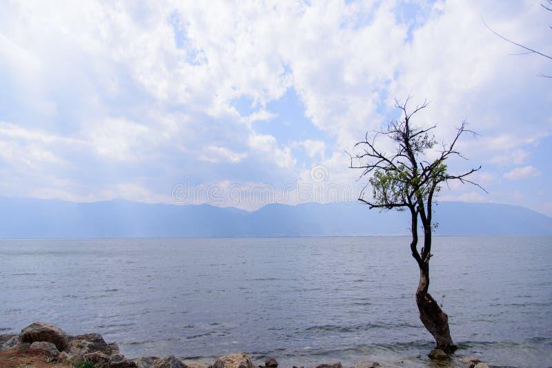 Un albero accanto al lago Erhai immagini stock libere da diritti