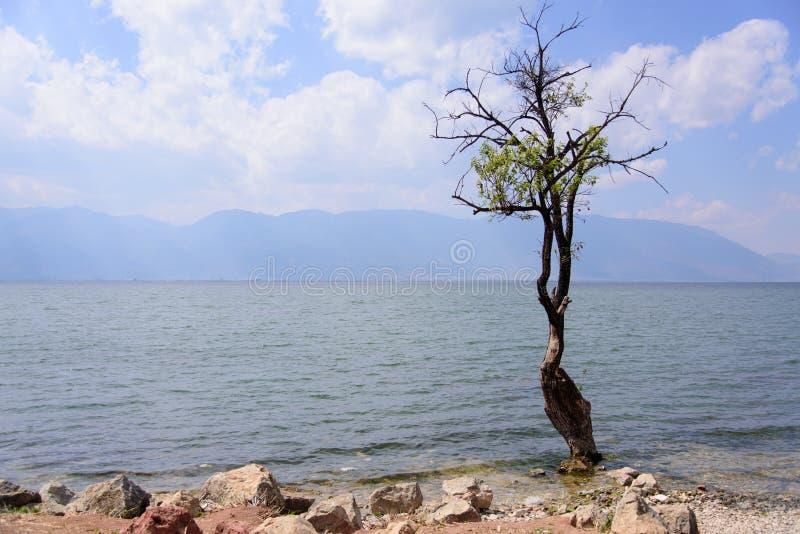 Un albero accanto al lago Erhai fotografie stock libere da diritti