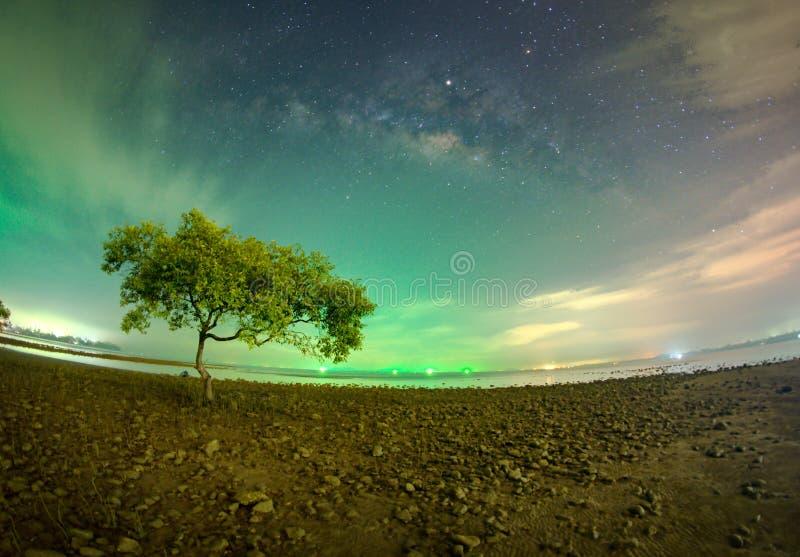 Un albero alla spiaggia di Chumphon, provincia di Chumphon Il movimento delle nuvole e della Via Lattea L'area della mangrovia ri fotografia stock libera da diritti