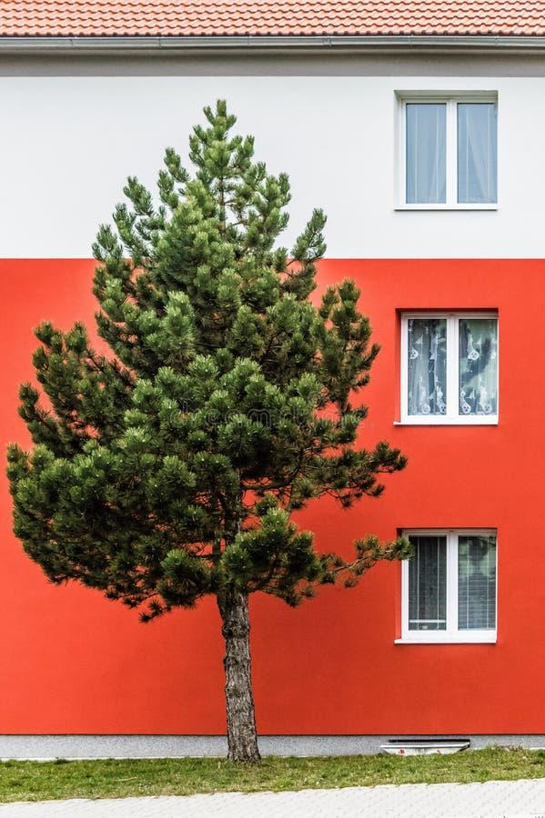 Un albero che sta alto davanti ad una località di soggiorno fotografia stock libera da diritti