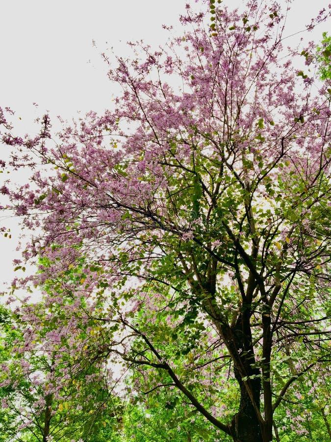 Un albero con il rosa e fiori porpora in mezzo al legno verde fotografia stock