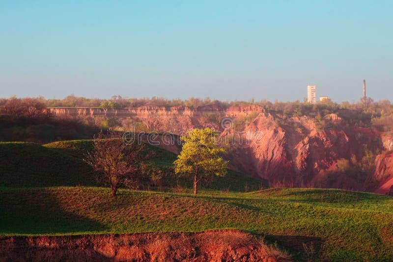 Un albero della primavera ed il crollo al suolo immagini stock libere da diritti