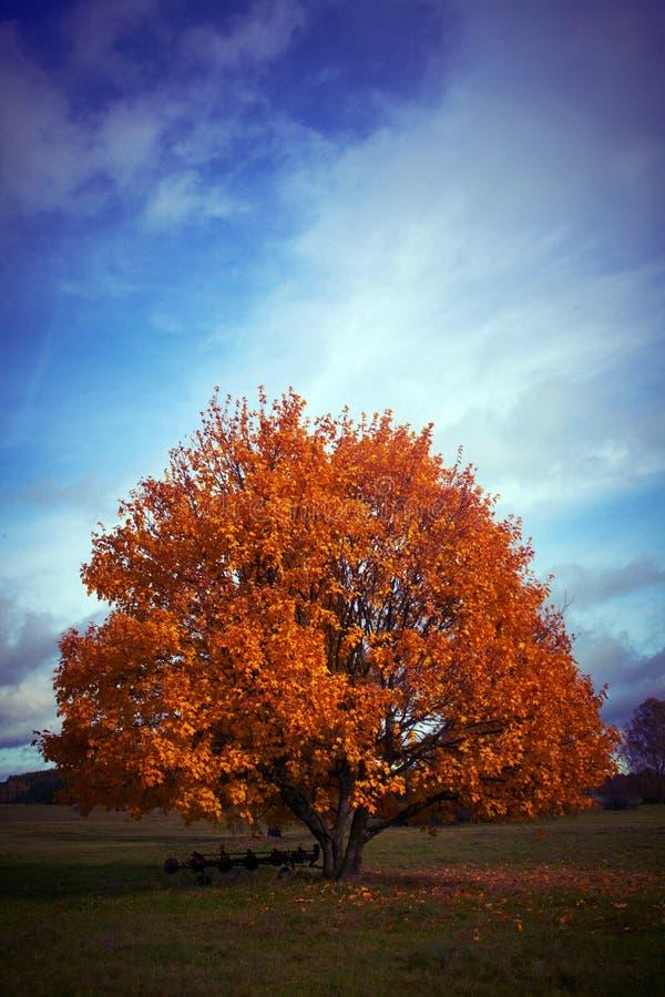 Un albero di autunno con un cielo blu nei precedenti immagine stock