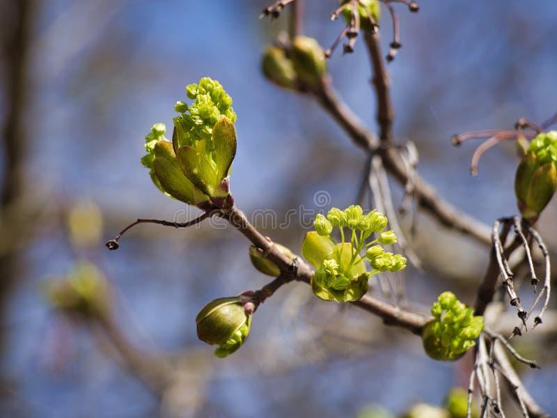 Un albero di fioritura durante la molla fotografie stock
