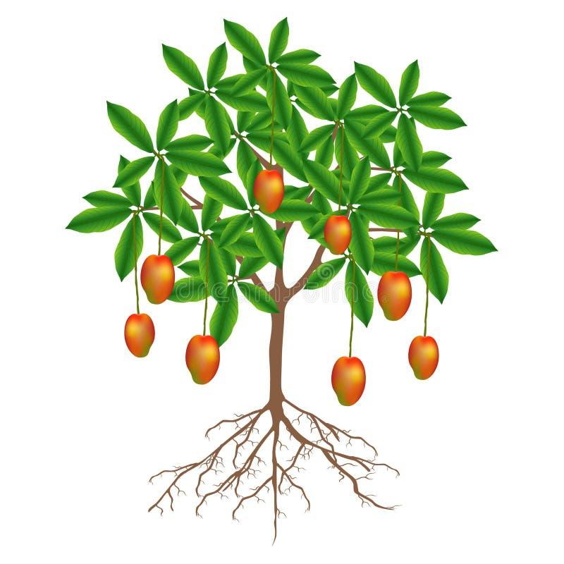 Un albero di mango con i frutti su un fondo bianco illustrazione vettoriale