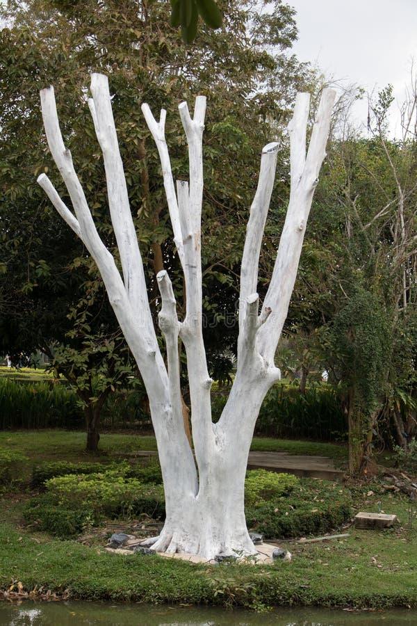 Un albero dipinto bianco senza foglie fotografia stock