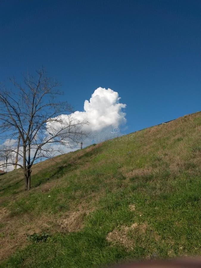 Un albero e nubi fotografia stock