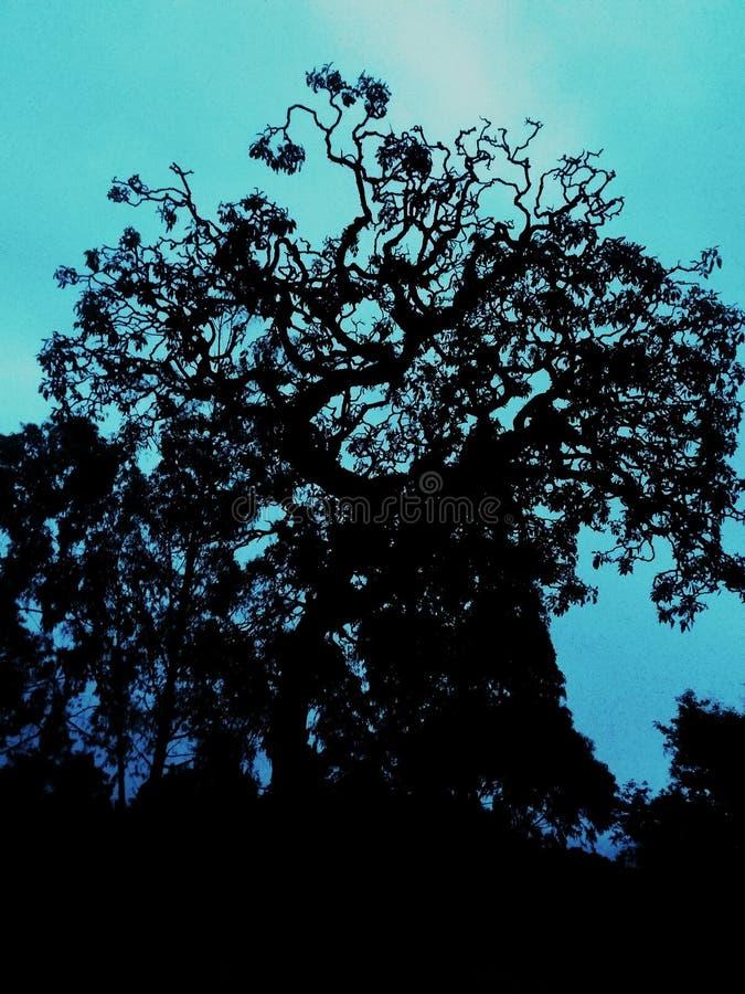 Un albero frequentato nell'inverno fotografie stock libere da diritti