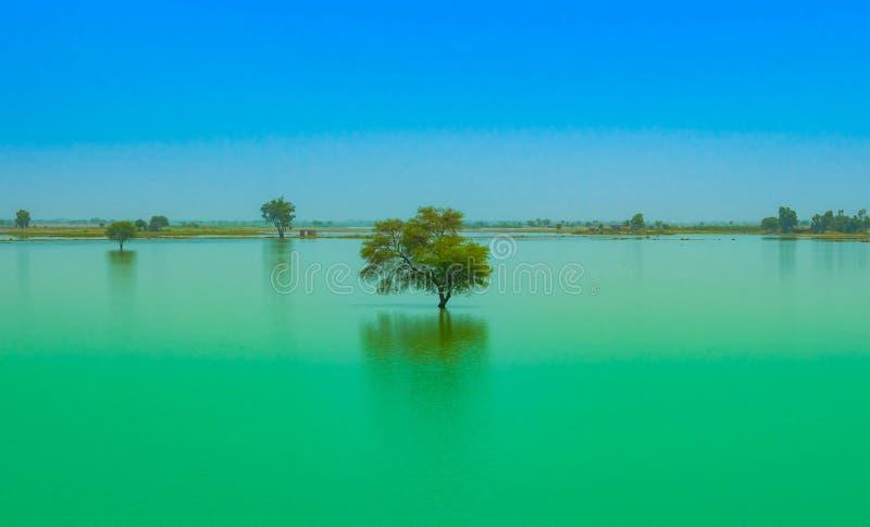 Un albero in un lago dell'acqua blu con il fondo del cielo blu fotografia stock libera da diritti