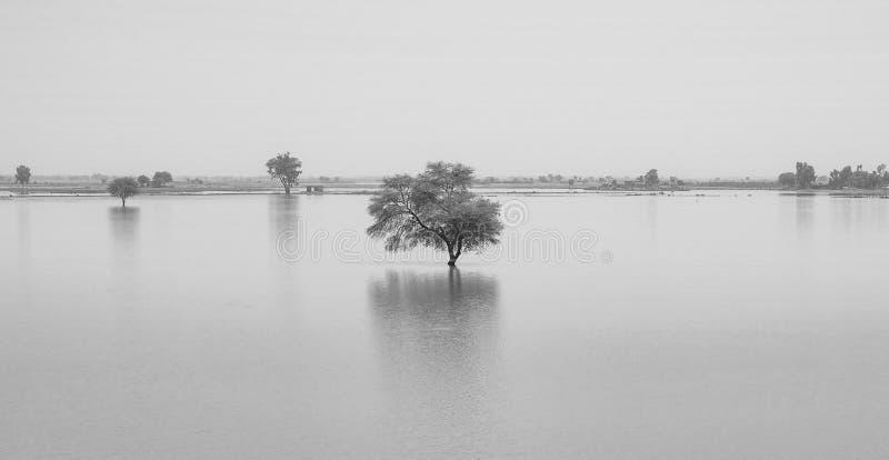 Un albero in un lago dell'acqua blu con il fondo di tramonto immagine stock libera da diritti