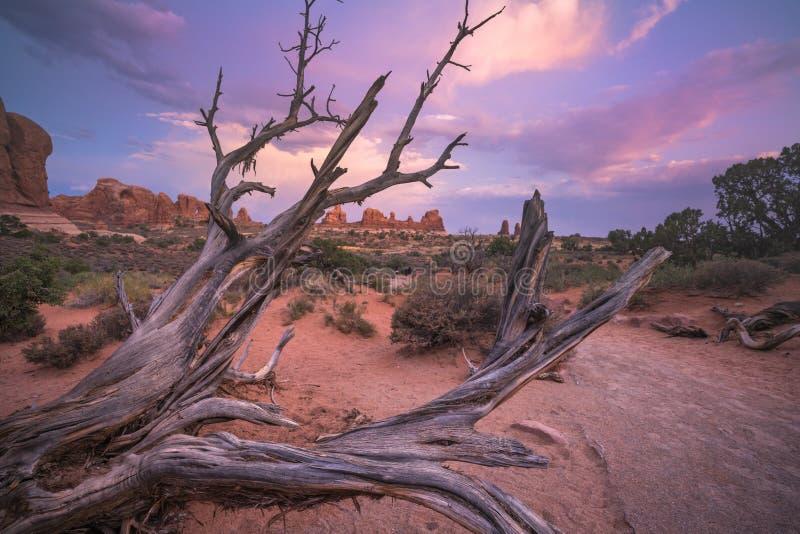 Un albero morto nel parco nazionale di arché immagini stock libere da diritti